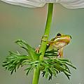 Kermits Canopy by Susan Candelario