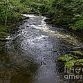Ketchikan River by Bev Conover