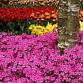 Keukenhof Floral Strata by David Beebe
