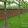 Keukenhof Gardens 11 by Mike Nellums