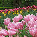 Keukenhof Gardens 17 by Mike Nellums