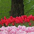 Keukenhof Gardens 18 by Mike Nellums