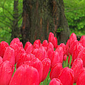 Keukenhof Gardens 19 by Mike Nellums