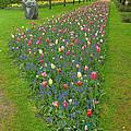 Keukenhof Gardens 26 by Mike Nellums
