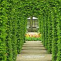 Keukenhof Gardens 31 by Mike Nellums