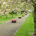 Keukenhof Gardens 32 by Mike Nellums