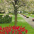 Keukenhof Gardens 33 by Mike Nellums