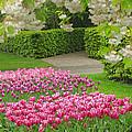 Keukenhof Gardens 35 by Mike Nellums