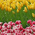 Keukenhof Gardens 37 by Mike Nellums