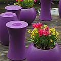 Keukenhof Gardens 46 by Mike Nellums