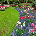 Keukenhof Gardens 52 by Mike Nellums