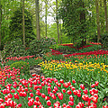 Keukenhof Gardens 53 by Mike Nellums