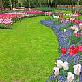 Keukenhof Gardens 54 by Mike Nellums