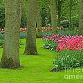 Keukenhof Gardens 60 by Mike Nellums