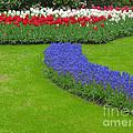 Keukenhof Gardens 62 by Mike Nellums