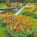 Keukenhof Gardens 70 by Mike Nellums