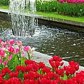 Keukenhof Gardens 71 by Mike Nellums