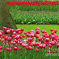 Keukenhof Gardens 91 by Mike Nellums