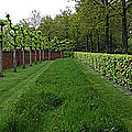 Keukenhof Gardens Panoramic 10 by Mike Nellums