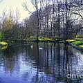 Keukenhof Lake Scene by Bob Phillips