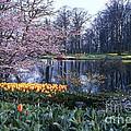 Keukenhof Spring by Bob Phillips