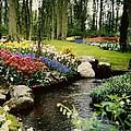 Keukenhof Tulip Gardens by Debra Barrie