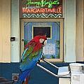 Key West - Parrot Taking A Break At Margaritaville by Ronald Reid