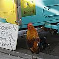 Key West - Rooster Making A Living by Ronald Reid