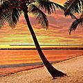 Key West Beach by Marty Koch