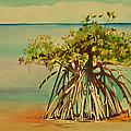 Keys Mangrove by Terry Arroyo Mulrooney