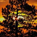Keystone Pine by Dale Kauzlaric