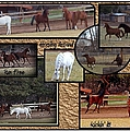Horses Kickin It  by Bobbee Rickard