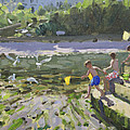 Kids and seagulls by Andrew Macara