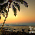 Kihei Palm Sunrise by Kelly Wade