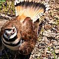 Killdeer On Its Nest by Chris Flees