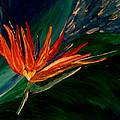 Kims Paradise by Kim Derington - Tillman