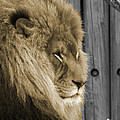 King In Sepia by Phillip W Strunk