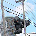 King Kong by Mary Halpin