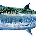 King Mackerel by Carey Chen
