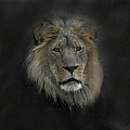 King Of Beasts Portrait by Ernie Echols