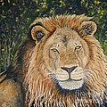 King Of The African Savannah by Caroline Street