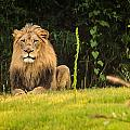 King Of The Jungle by Keith Allen