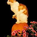 King Of The Pumpkin by Peg Urban