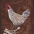 King Richard The Rooster by Barbara St Jean