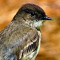 Kingbird Chillin by Art Dingo