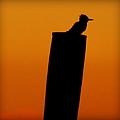 Kingfisher by Karen Wiles