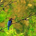 Kingfisher  by Milind Waichal