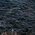 Seagulls At Cliffs Ready To Fish In Mediterranean Sea - Kings Of The World by Pedro Cardona Llambias