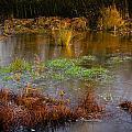 Kintbury Newt Ponds by Mark Llewellyn