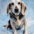 Kippy Beagle Senior And Best Dog Ever by Iris Richardson